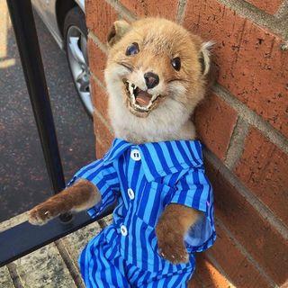 Baby Jesus Fox